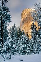 Landscapes: Yosemite National Park