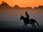 SARATOGA SPRINGS, NY - AUGUST 27: A horse exercises on the Oklahoma Training Track at sunrise on Travers Stakes Day at Saratoga Race Course on August 27, 2016 in Saratoga Springs, New York. (Photo by Scott Serio/Eclipse Sportswire/Getty Images)
