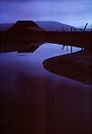 Horses at dawn, Samish River, Washington State, Pacific Northwest, Samish estuary, Puget Sound,.