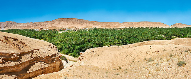 The date palms of the Sahara desert oasis of Mides, Tunisia, North Africa