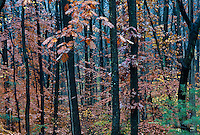 Wet forest trees in autumn, New Jersey, USA