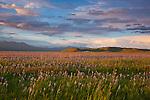 Camas County, Idaho<br /> Centennial Marsh Camas Prairie<br /> Evening clouds over camas praire and distant hills