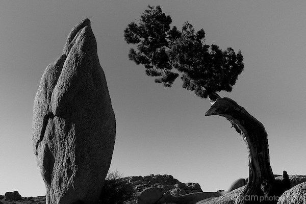 Black and white of single tree with single rock