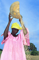 Mali 2003 Agriculture. Millet and Sorghum