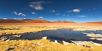 Colorful Rió Quepiaco Bofedales wetlands, near Salar de Tara in Los Flamencos National Reserve, San Pedro de Atacama, Chile