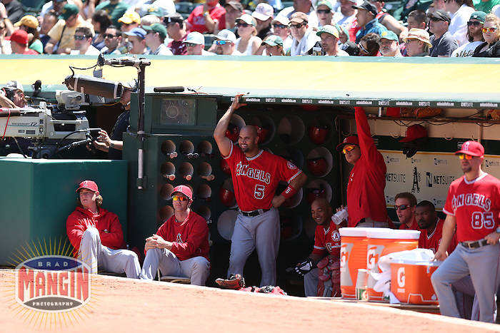 OAKLAND, CA - MAY 1:  Albert Pujols #5 of the Los Angeles Angels watches from the dugout during the game against the Oakland Athletics at O.co Coliseum on May 1, 2013 in Oakland, California. Photo by Brad Mangin