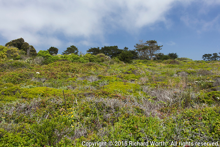 The lush and varied green foliage along the bluff at Bean Hollow State Beach.