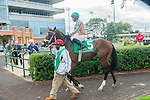 Conquest Typhoon(5) with Jockey Patrick Husbands aboard before the Summer Stakes at Woodbine Race Course in Toronto, Canada on September 13, 2014 with Jockey Patrick Husbands aboard.
