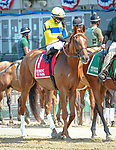 July 5, 2021: Red Knight, ridden by Manny Franco, in the post parade prior to the 2021 running of the Grand Couturier S. at Belmont Park in Elmont, NY. Sophie Shore/ESW/CSM