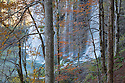 Woodland surrounding Veliki Prstavci waterfalls. Plitvice Lakes National Park, Croatia. November.