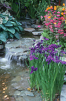 Iris at water's edge  in pretty pond with waterfall; blue Hosta, Primula, stream, flowing water, slate rocks, spring blooming plants, purple, pink and orange may seem clashing colors, but work wonderfully here in a colorful scene.