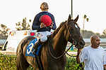 CYPRESS, CA  DECEMBER 3: #3 Majestic Heat ridden by Mike Smith, head into the winners circle after winning the Bayakoa Stakes (Grade ll) on December 3, 2017, at Los Alamitos Race Course in Cypress, CA. (Photo by Casey Phillips/ Eclipse Sportswire/ Getty Images)