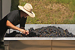 Pedernales Cellars 1st crush of 2012