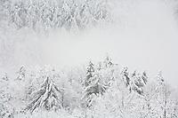 Winter forest, Flint Mountain