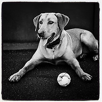 OAKLAND, CA - OCTOBER 1: iPhone Instagram of Reba the dog resting on workout day before the American League Wild Card playoff game between the Tampa Bay Rays and Oakland Athletics at the Oakland Coliseum on October 1, 2019 in Oakland, California. (Photo by Brad Mangin)