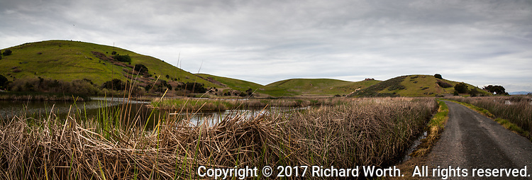 The green hills  at Coyote Hills Regional Park bear testimony to the recent rains, as do the full wetlands and trails closed due to flooding, though not this one.