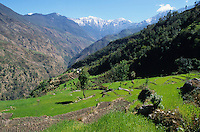 NEPAL Himalaya, Sherpa village Suri, terrace fields with wheat and snow covered mountains Gauri Shankar Range / NEPAL Himalaja, Terrassenfelder mit Weizen des Sherpa Dorf Suri in Berghaengen im Himalaya Gebirge