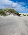 Pea Island National Wildlife Refuge, North Carolina<br /> Sand dune with shells and sea oats on Pea Island, Cape Hatteras