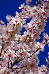 Fresno - Blossom Trail & Foothills   California