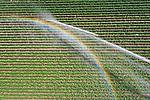 Foto: VidiPhoto<br /> <br /> RANDWIJK – Akkerbouwer Gé van Lonkhuyzen uit Randwijk in de Betuwe neemt geen risico. Maandag draaien zijn spuitkanonnen (één grote en twee kleintjes) op volle kracht. Dinsdag opnieuw, zo is het voornemen. Gelukkig is er voldoende grondwater voorhanden. Tijdens de regenperiode enkele weken geleden is er op zijn percelen nauwelijks water gevallen. Ook tijdens de spaarzame regenval vorig jaar juni, vielen er op de Randwijkse akkers slechts enkele druppels en moest er volop beregend worden. Voor donderdag wordt er een flinke plons water voorspeld, maar als Randwijk opnieuw de boot mist stopt en de akkerbouwer de boel niet nat houdt, stopt de groei van zijn aardappels waarvan de vroegste soort -als alles goed gaat- over twee weken geoogst wordt. Van Lonkuyzen heeft dit jaar 7 ha. aardappels.
