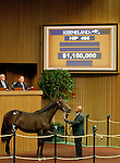 September 16, 2015: Hip 495 War Front - Orate colt consigned by Claiborne Farm.  Candice Chavez/ESW/CSM