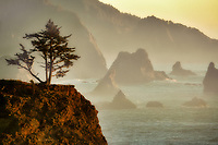 foggy coastline at Samuel H. Boardman State Park, Oregon