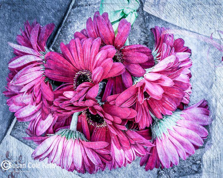 A bouquet of pink daisies