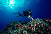 Horizontal image of a female diver lighting a lionfish over a pristine reef within the outer islands in the Bismarck Sea - Papua New Guinea.