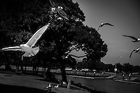 With a flurry of wings, gulls take to the air, temporarily abandoning the feast of bread left by a misguided do-gooder.  The effect  recreates a scene from Hitchcock's The Birds, but at the San Leandro Marina instead of Bodega Bay, further north on the California coast.