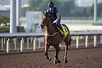 SHA TIN,HONG KONG-DECEMBER 09: Growl,trained by <br /> Richard Fahey,exercises in preparation for the Hong Kong Sprint at Sha Tin Racecourse on December 9,2016 in Sha Tin,New Territories,Hong Kong (Photo by Kaz Ishida/Eclipse Sportswire/Getty Images)