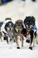 Diana Moroneys Dogs During 2005 Iditarod Ceremonial Start