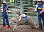 Logan Lott, 7, of Carson City, competes in the Mutton Busting event at the 5th Annual Carson City Bulls, Broncs & Barrels event at Fuji Park, in Carson City, Nev., on Saturday, July 29, 2017. <br /> Photo by Cathleen Allison/Nevada Photo Source