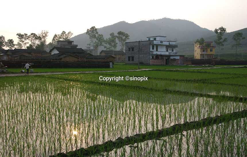 Rice paddies in a typical village in Huaji, Guangdong Province, China.<br /> 20-APR-04