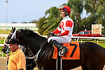 January 16, 2016:  International Star with Miguel Mena up returns to the winners circle after winning the Louisiana Stakes race at the Fairgrounds race course in New Orleans Louisiana. Steve Dalmado/ESW/CSM