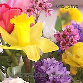 Gisela, FLOWERS, BLUMEN, FLORES, photos+++++,DTGK1979,#f#