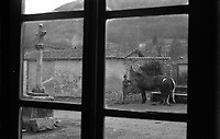 Reportage à Artigues Haute-Garonne (1978) <br /> <br /> 10 janvier 1978. Vue extérieure prise depuis l'intérieur d'une habitation ; au 1er plan fenêtre ; au 2nd plan un homme face à son cheval