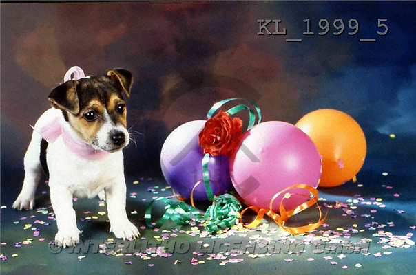 Interlitho, Alberto, ANIMALS, dogs, photos, dog, ball.rose(KL1999/5,#A#) Hunde, perros