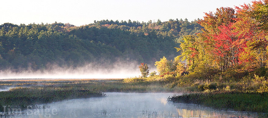 Swamp Maples and Morning Mist At The Inlet of Lake Massabesic
