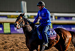 October 30, 2019: Breeders' Cup Turf Sprint entrant Final Frontier, trained by Thomas Albertrani, exercises in preparation for the Breeders' Cup World Championships at Santa Anita Park in Arcadia, California on October 30, 2019. Scott Serio/Eclipse Sportswire/Breeders' Cup/CSM
