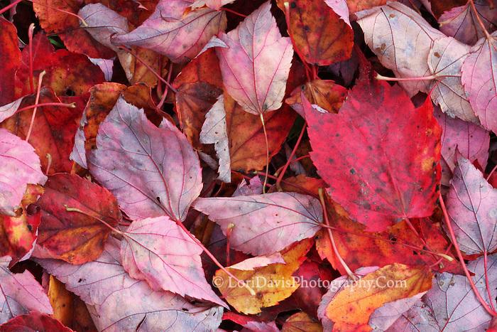 Fallen Autumn Leaves  #N14