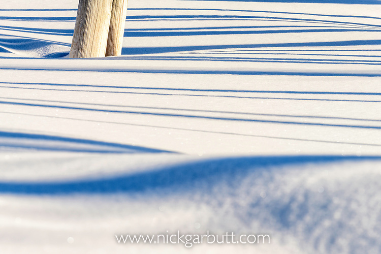 Early morning shadows in petrified pine forest.  Firehole Valley, Midway Geyser Basin, Yellowstone, USA. January