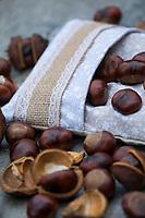 Kastanienkissen, Kastanien-Kissen, Wärmekissen, Wärme-Kissen, Kastanien werden in einen Kissenbezug gefüllt, können dann im Ofen erwärmt und als Wärmekissen genutzt werden, Kissen massiert und wärmt, natürliche Wärmflasche. Gewöhnliche Rosskastanie, Ross-Kastanie, Kastanie, Aesculus hippocastanum, Horse Chestnut, horse-chestnut, conker tree, conker, conkers, Le marronnier commun, marronnier d'Inde, marronnier blanc