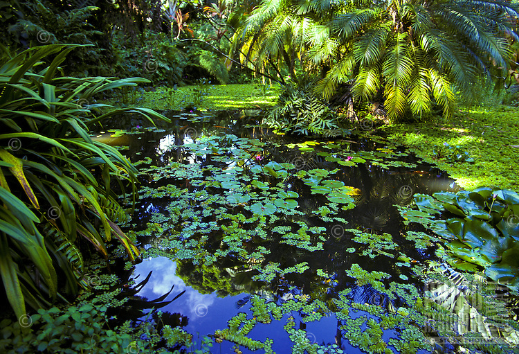 Hawaii Tropical Botanical Garden found on the big island