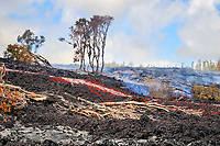 A'a Lava flow in the abandoned Royal Gardens subdivision, East of Hawaii, USA Volcanoes National Park, Kalapana, Hawaii, USA, The Big Island of Hawaii, USA