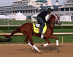 April 21, 2014 Danza and rider Nick Bush gallop at Churchill Downs.  Danza is owned by Eclipse Thoroughbred Partners and trained by Todd Pletcher.  He recently won the Arkansas Derby at Oaklawn Park.