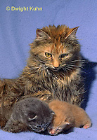 SH31-010z  Cat - mother with kittens