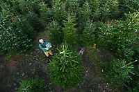 Christmas tree growers expecting bumper sales as Covid forces people to stay at home this year.