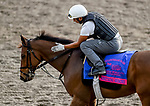 January 24, 2019: Something Awesome exercises as horses prepare for the Pegasus World Cup Invitational on January 24, 2019 at Gulfstream Park in Hallandale Beach, Florida. John Voorhees/Eclipse Sportswire/CSM