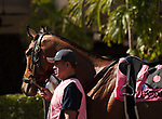 HALLANDALE BEACH, FL - March 3: Fly So High, #8, in the paddock, prior to winning the Grade II Davona Dale Stakes at Gulfstream on March 3, 2018 in Hallandale Beach, FL. (Photo by Carson Dennis/Eclipse Sportswire/Getty Images.)