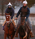 Ce Ce, trained by trainer Michael W. McCarthy, exercises in preparation for the Breeders' Cup Distaff at Keeneland Racetrack in Lexington, Kentucky on November 2, 2020.